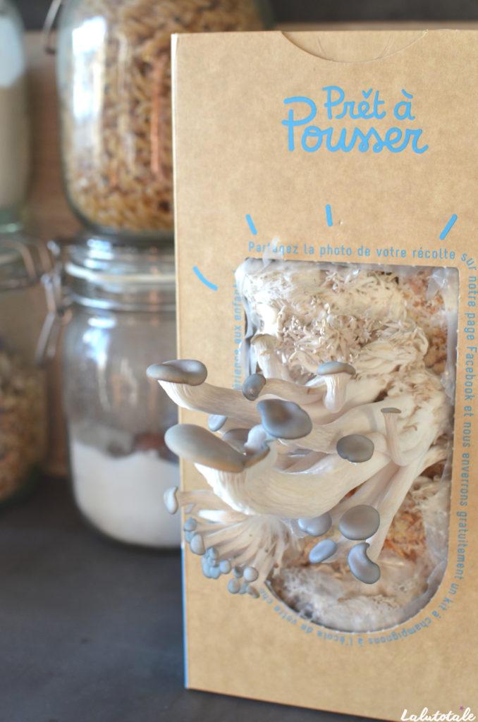prêt à pousser kit champignons pleurotes gris avis